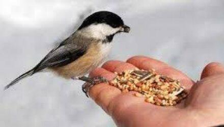 Кормление птиц фастфудом может привести к формированию новых видов в дикой природе