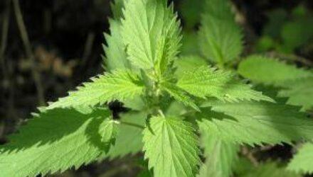 Лучшие натуральные средства от аллергии