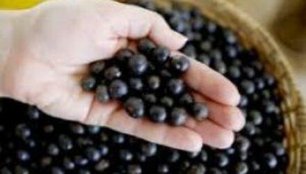 Бразильская ягода асаи — природный антиоксидант, помогающий похудеть