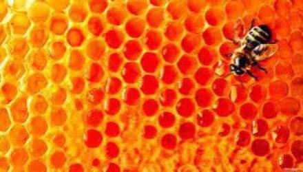 Можно ли употреблять мед худеющим: ответ диетолога