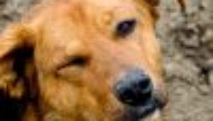 Более трёх тысяч животных забрали москвичи из приютов в прошедшем году