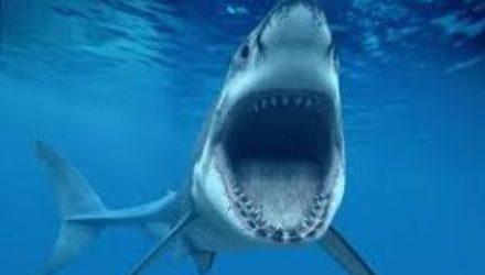 Древнюю акулу назвали «потерянным звеном» в эволюции позвоночных