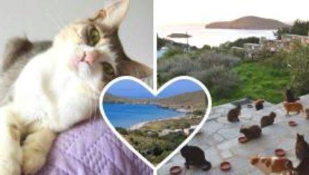 Работа мечты: на райский остров приглашают смотрителя кошек