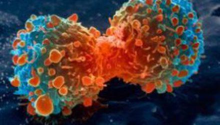 Медики научились усыплять рак